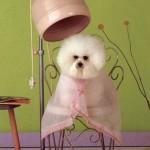 ГРУМИНГ — спектр гигиенических процедур по уходу за животным.