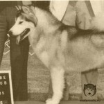 Ch Princess Nikkita Sno-Kloud - победитель Бест ин Шоу, топ сука-маламут 1985 года