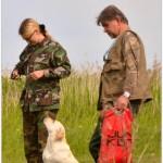 Cостязания ретриверов по розыску и подаче битой птицы ранга САСТ