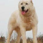 Агрессивная собака без хозяина бродил в парке.