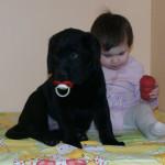 Лабрадом Фрам с маленькой хозяйкой Дашей