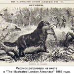 Рисунок ретривера на охоте