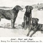 Ned (1882) и Avon (1885)