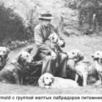 Major Wormald  с группой желтых лабрадоров