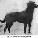 FT. Ch. Peter of Faskally