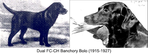 Dual FC-CH Banchory Bolo