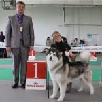 Аляскинский маламут Рейна (Chesvik-Top Oda La Reine) – Юный Чемпион Украины, 2011 г.