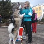 Аляскинский маламут Рейна (Chesvik-Top Oda La Reine) – г.Ровно, 2012