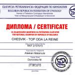Аляскинский маламут Рейна (Chesvik-Top Oda La Reine) – Чемпион Болгарии