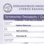 Аляскинский маламут Рейна (Chesvik-Top Oda La Reine) – Чемпион Кипра