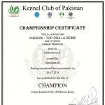 Аляскинский маламут Рейна (Chesvik-Top Oda La Reine) – Чемпион Пакистана