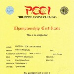 Аляскинский маламут Рейна (Chesvik-Top Oda La Reine) – Чемпион Филиппин