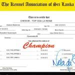 Аляскинский маламут Рейна (Chesvik-Top Oda La Reine) – Чемпион Шри Ланки