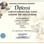 Аляскинский маламут Рейна (Chesvik-Top Oda La Reine) – Гранд Чемпион Румынии