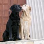 Собачий санаторий по-британски