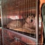 Правила перевозки собак в пассажирском автотранспорте