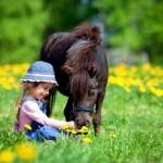 Иппотерапия – лечение с помощью лошади.