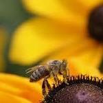 Лечение при помощи пчелиного яда