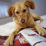Собака-умняка