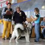 Аляскинский маламут Адель (21 мес.) Выставка САС-UA в г.Ровно