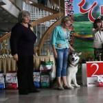 Аляскинский маламут Гольф (21 мес.) Выставка САС-UA в г.Ровно