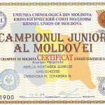 Сертификат Юного Чемпиона Молдовы