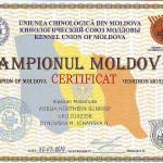 Сертификат Чемпиона Молдовы