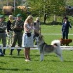 Аляскинский маламут Рада (15 мес.) Выставка CAC-UA в Хмельницком