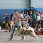 Аляскинский маламут Рада (17мес.) Международная выставка в Кракове
