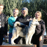 Аляскинский маламт Триша (Trisha Del Biagio)