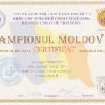 Чемпион Молдовы