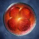 Ембриогенез