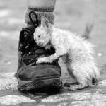 Бездомный, кем-то брошенный кот