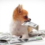 Щенок и деньги
