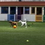 Парк для собак в Дубаи