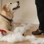 Не послушная собака
