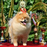 Pride Of Pom Colyn Triumphant