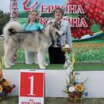Гольф (Лучшая собака выставки)