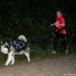 Собака бежит кросс с владельцем