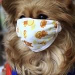 Собак в маске от собачьего гриппа