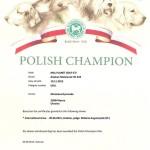 Сертификат Чемпиона Польши