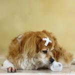 Пострадавшая собака