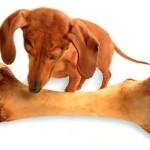 Купить ли собаке кость?