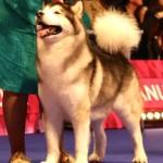 Sykwalker Sausymayok, ВОВ и Лучший ветеран на World dog show 2016