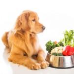 Собака-вегетарианец