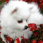 Ядовитые растения для собак