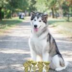 Эрика Northern Sunrise Чемпион Северных Ездовых Собак