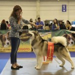 Чемпион Северных Ездовых Собак
