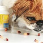 Как дать собаке лекарство