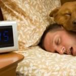 Сон с собакой